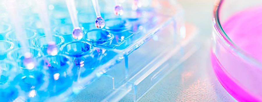 Imagen terapia regeneracion articular con celulas madre